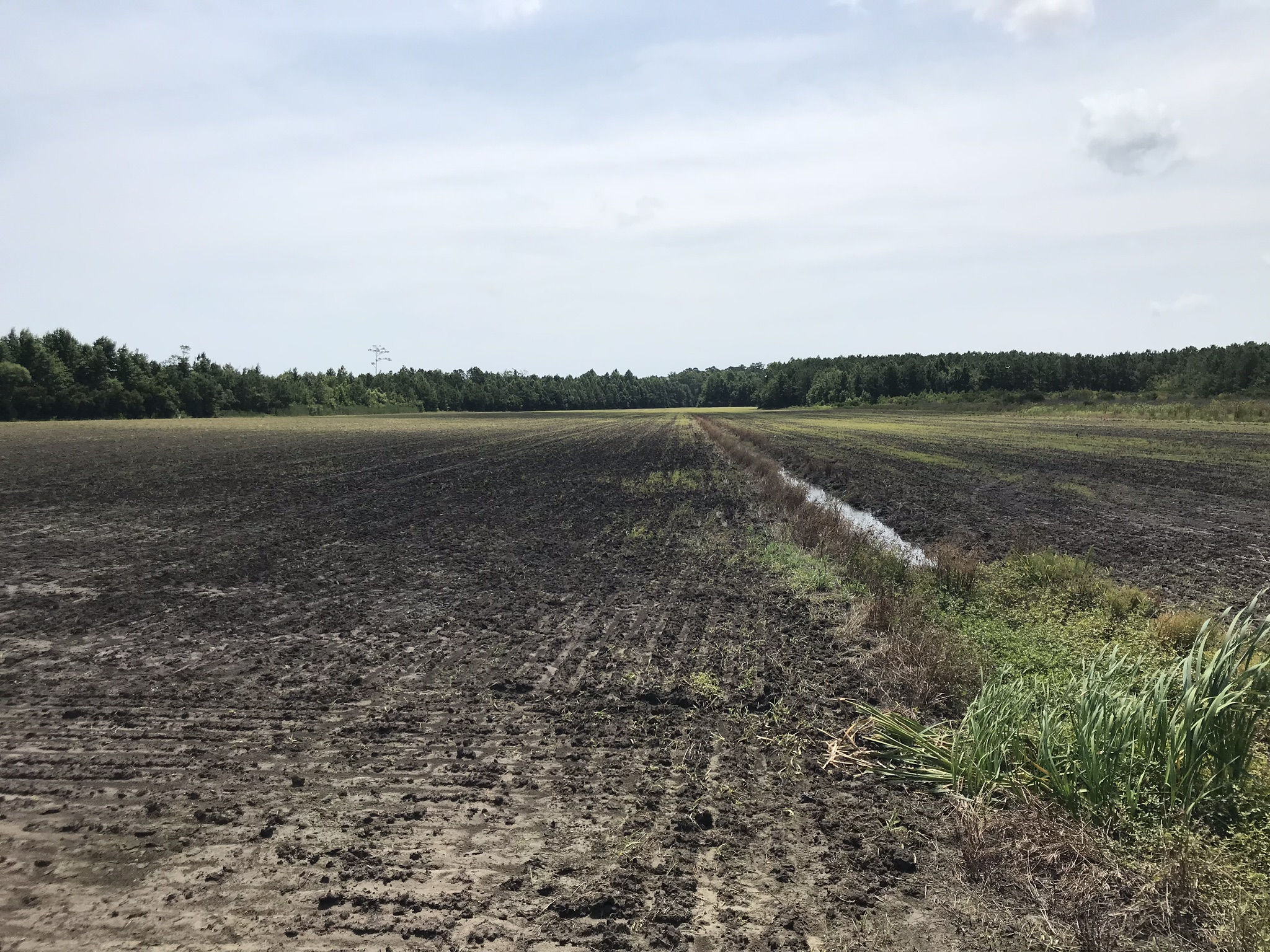 Land For Sale - Farm, Timber & Prime Hunting Land 334 acres | The